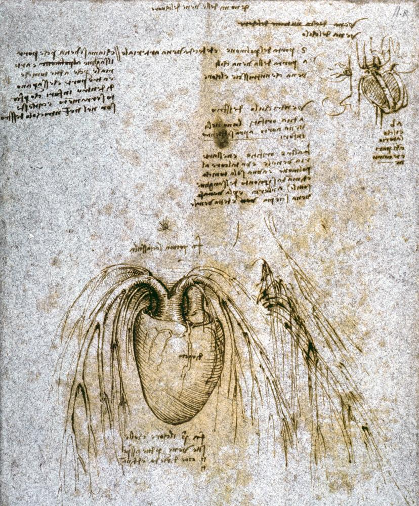 Beste Da Vincis Skizzen Anatomie Bilder - Anatomie Ideen - finotti.info